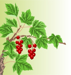 Twig garden currant bushes with red berries vector image