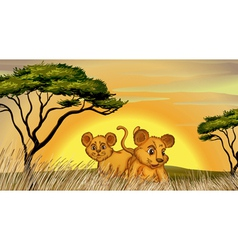 two cubs vector image vector image