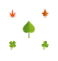 Flat icon foliage set of leafage alder aspen and vector