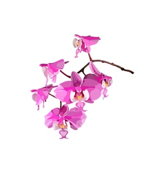 Pink orchid flower vector