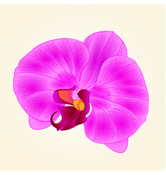 Purple orchid beautiful flower closeup isolated vector