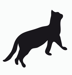 Silhouette of a cat vector