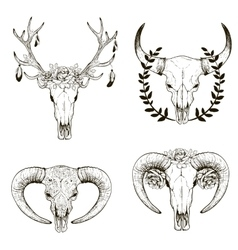 Cow skull collection vector image vector image