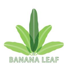 banana nature green leaf logo vector image vector image