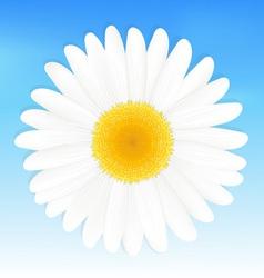 Daisy Background vector image