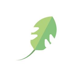 Leaf foliage natural floral botanical vector