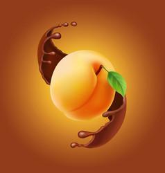 Ripe fuit yellow ripe apricot splash chocolate vector