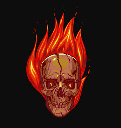skull on fire on a black background graphics vector image