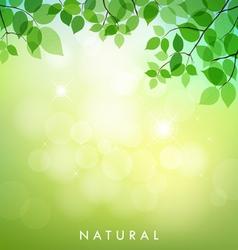 Green leaf natural background vector image vector image