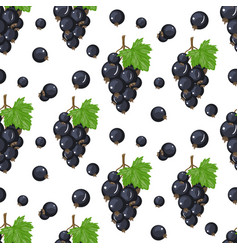 black currant seamless pattern background vector image