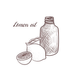 drawing lemon oil vector image
