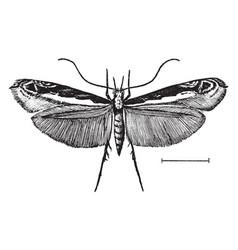 Leaf blotch miner moth vintage vector