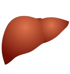 Liver vector