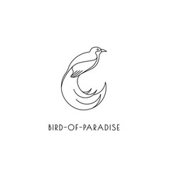 bird of paradise outline icon vector image