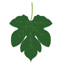 fig leaf on white background vector image