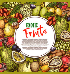Fruit sketch poster exotic fruits vector