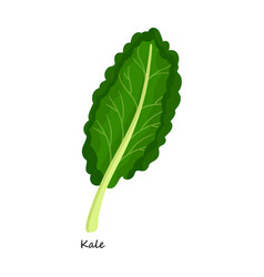 Kale iconcartoon icon isolated on vector
