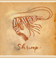 Shrimp cutting scheme craft vector