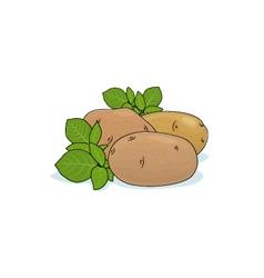 Potato Isolated on White vector image
