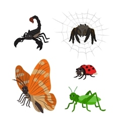 Cartoon set scorpion spider butterfly ladybug vector image vector image