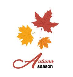 autumn season maple leaves design image vector image