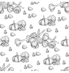 hand drawn seamless pattern of garlic vector image