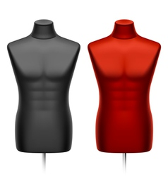 male tailors dummy mannequin vector image