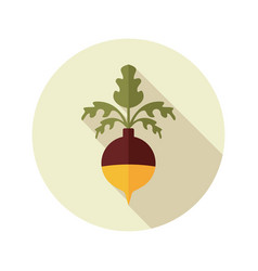 Rutabaga or swede flat icon vegetable root vector