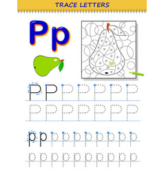 Tracing letter p for study alphabet printable vector