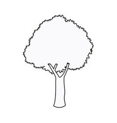 oak tree plant nature garden outline vector image