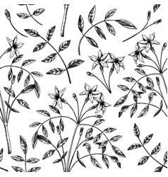Hand sketched jasmine seamless pattern botanical w vector