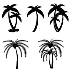 Palm tree in black color vector