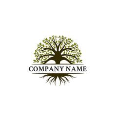 Trees logo designs oak olives vector