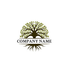 Trees logo designs oak trees olives trees vector