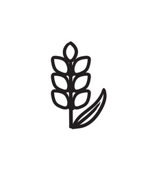 Wheat sketch icon vector