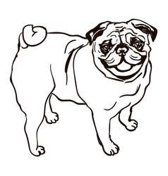 Dog breed pug vector