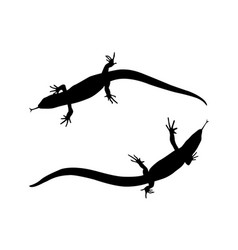 sticker on car of reptile silhouette of lizard vector image
