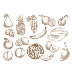 Farm fruits isolated sketches set vector image
