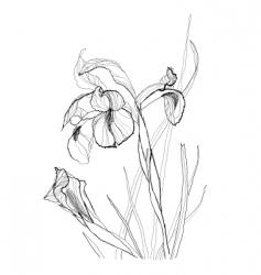 Iris flowers vector