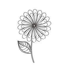 camomile flower decoration sketch vector image