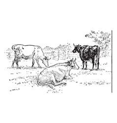 Cows vintage vector