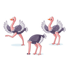 set of ostriches in different poses vector image