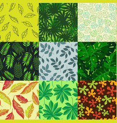 leaves nature summer autumn vector image