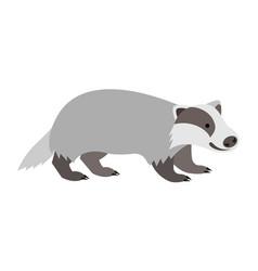 cute smiling wild badger cartoon vector image