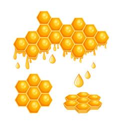 honeycombs with bee honey hexagon cells vector image