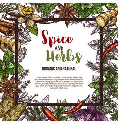 Sketch poster of spices and herbs vector