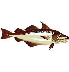 haddock vector image