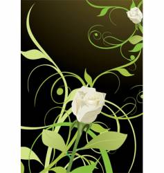 blossoming rose vector image vector image