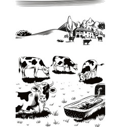 Cows grazing in a meadow near a watering hole vector