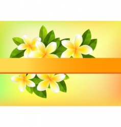 Frangipani background vector